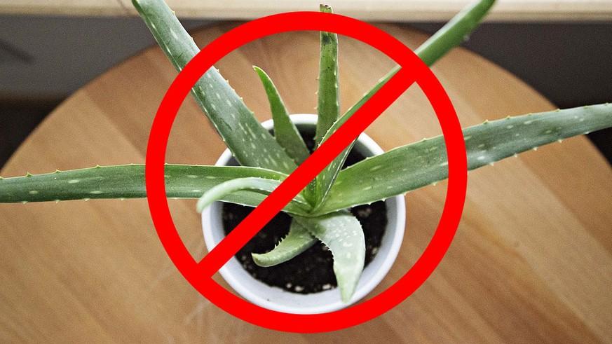 diese zimmerpflanzen sind f r deine katze gef hrlich watson. Black Bedroom Furniture Sets. Home Design Ideas