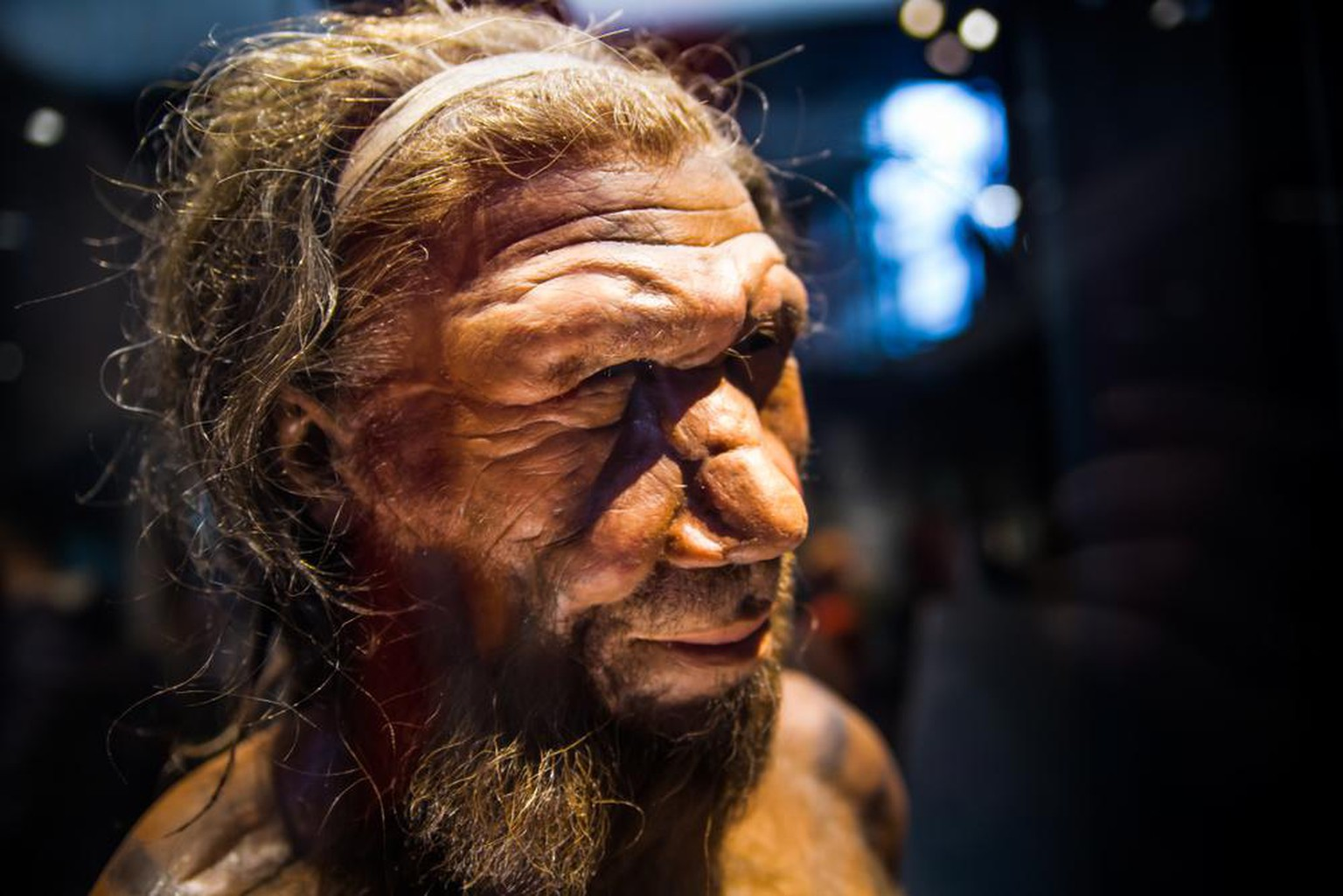 Neandertaler-Mann, London, UK - March 11, 2018: Neanderthal Homo adult male, based on 40000 year-old remains found at Spy in Belgium. National history museum.