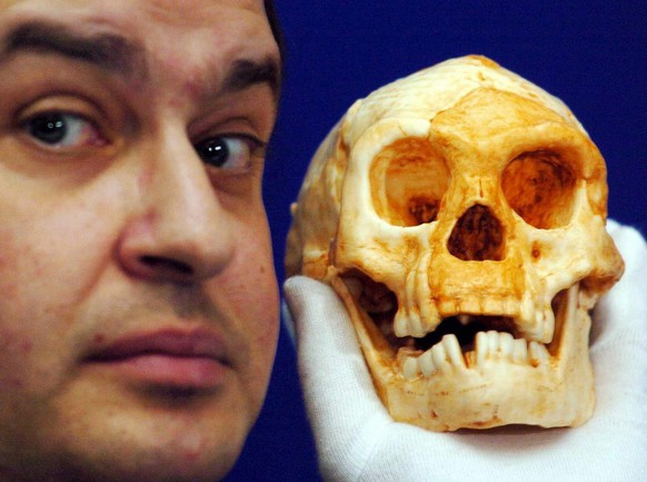 Dr Henry Gee gets close to a new species of human, living on the Indonesian island of Flores as recently as 18,000 years ago, during a press conference in central London, Wednesday 27 October 2004. The discovery of the partial skeleton came at a cave site called Liang Bua and belonged to an individual who, while fully adult, was barely a metre tall and had a skull the size of a grapefruit.  (KEYSTONE/EPA/Johnny Green)   === UK OUT, IRELAND OUT ===