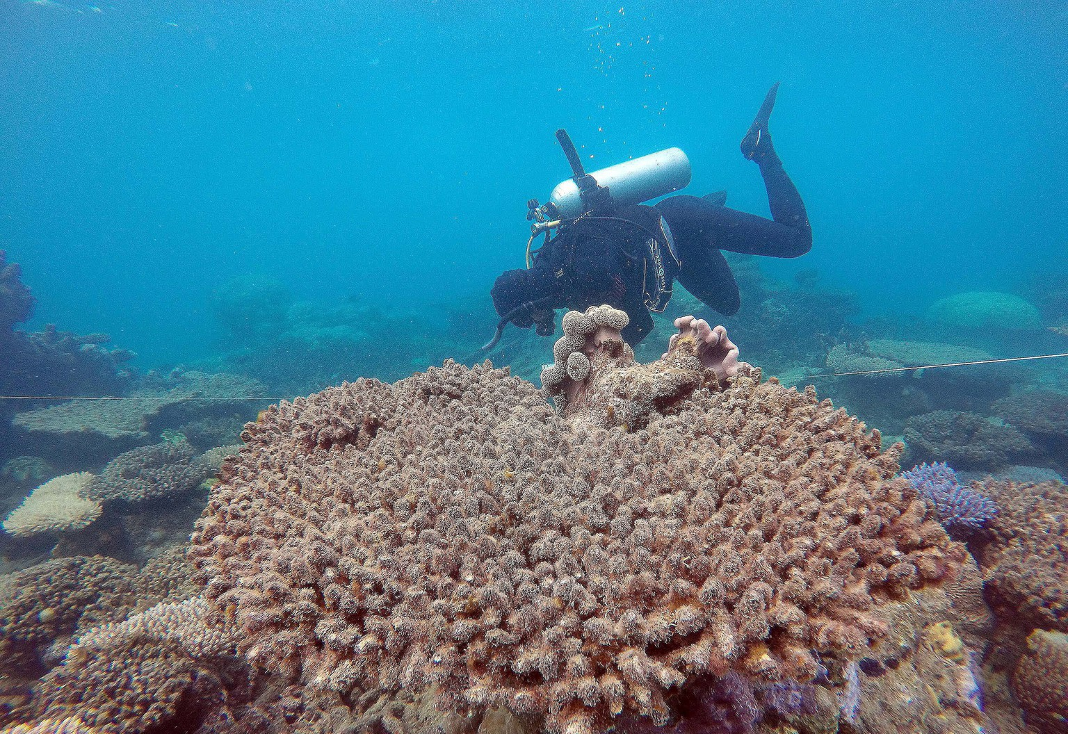 epa05651553 A handout picture taken in November 2016 and made available by the Australian Research Council (ARC) Centre of Excellence for Coral Reef Studies on 29 November 2016 shows scientists assessing coral mortality on Zenith Reef following the bleaching event, Northern Great Barrier Reef, Queensland, Australia. A new study has found higher water temperatures have ravaged the Great Barrier Reef, causing the worst coral bleaching ever recorded by scientists. In the worst affected area 67 percent of a 700km swath in the north of the reef lost its shallow-water corals over the past eight to nine months, the ARC Centre of Excellence for Coral Reef Studies based at James Cook University study found.  EPA/ANDREAS DIETZEL/ARC CENTRE OF EXCELLENCE FOR CORAL REEF STUDIES AUSTRALIA AND NEW ZEALAND OUT HANDOUT EDITORIAL USE ONLY/NO SALES