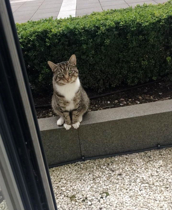 Ralph die Katze https://www.reddit.com/r/aww/comments/6u1e3m/this_is_ralph_he_comes_to_collect_our_cat_for/