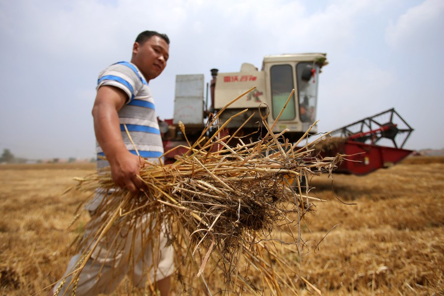 epa04249318 A Chinese farmer holds wheat as a reaping machine operates at a wheat field in rural Jiaozhou city, Shandong province, China, 11 June 2014. Chinese farmers started to harvest their wheats in Shandong province, a major producing area for crop in China. As many as 11.47 million hectares wheat field have been harvested in China, with more than 50 percent of wheat belt in China, according to the Ministry of Agriculture.  EPA/WU HONG