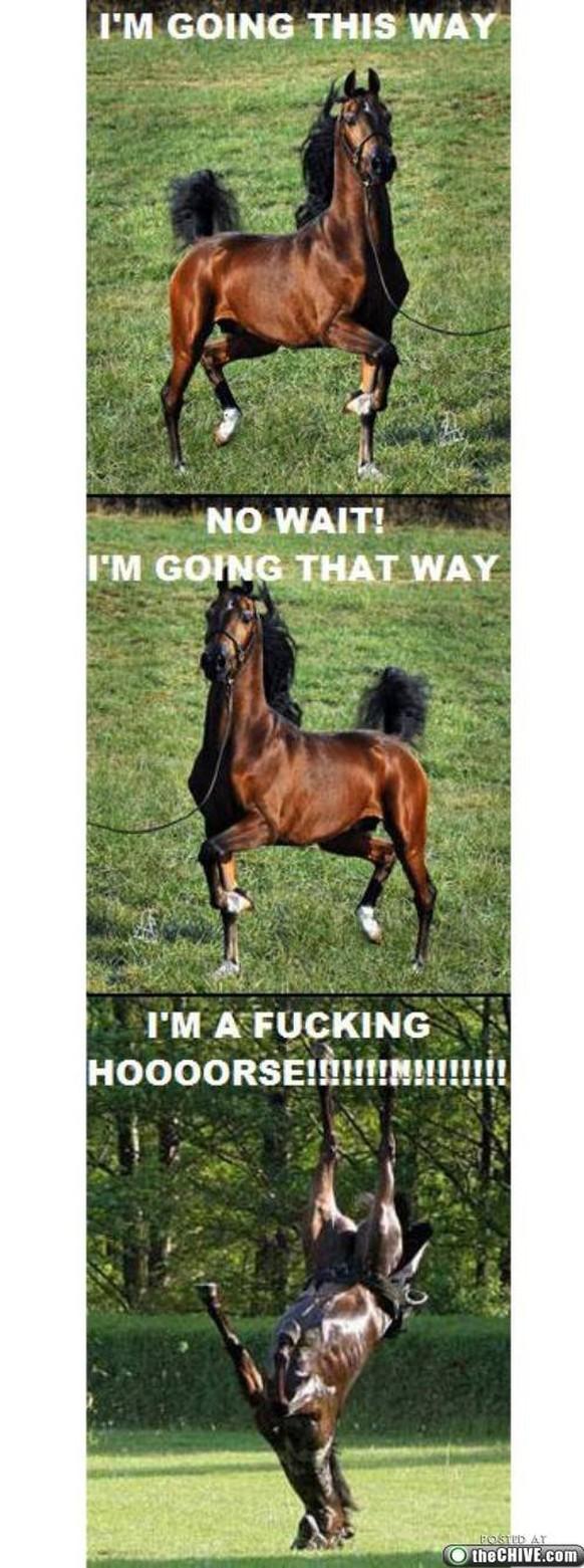 Pferden mit haben sex Frauen haben