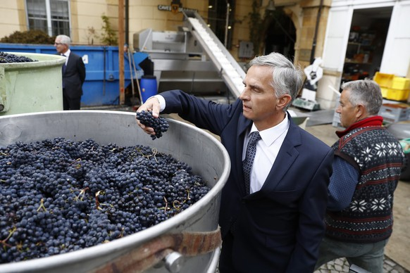 epa05580898 Swiss Foreign Minister Didier Burkhalter inspects the grapes during a spontaneous visit in the winery 'Cave de Ville', prior to the arrival of Swedish Foreign Minister Margot Wallstrom, in Neuchatel, Switzerland, 11 October 2016.  EPA/PETER KLAUNZER