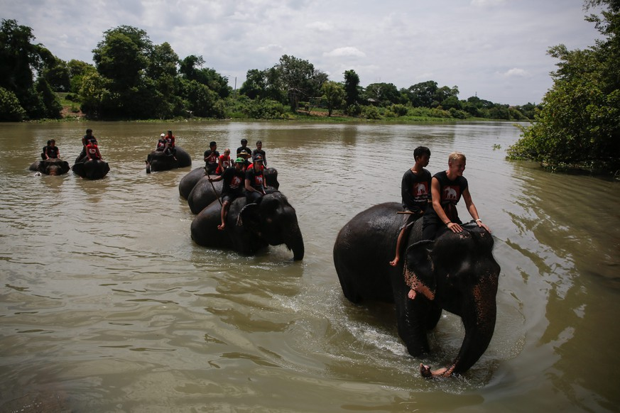 epa04879949 Elephants are taken for a bath in the river as a group of foreigners receive training on caring for elephants at the Royal Elephant Kraal in the ancient historical city of Ayutthaya, north of Bangkok, Thailand, 11 August 2015. The Royal Elephant Kraal is one of Thailand's best homes for elephants with as many as 65 baby elephants born since opening 20 years ago, and home to a total of over 200 elephants. The World elephant day is celebrated on 12 August, dedicated to the preservation and protection of elephants worldwide.  EPA/DIEGO AZUBEL