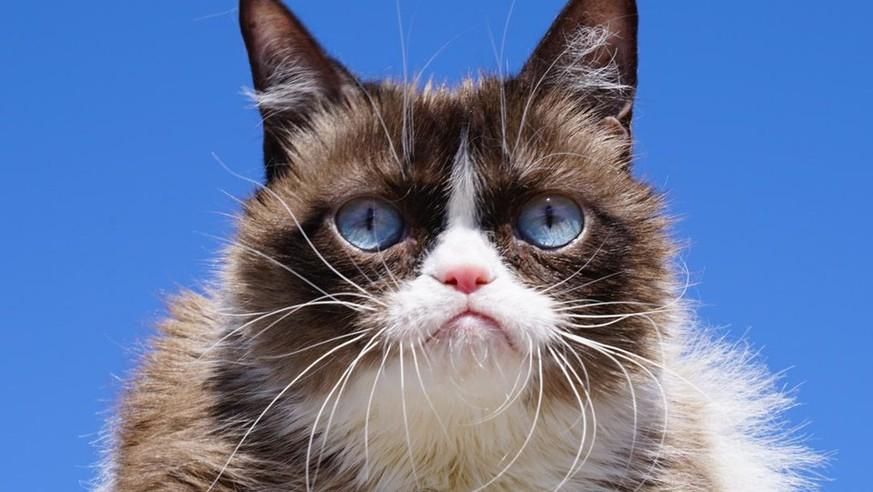 Berühmteste Katze