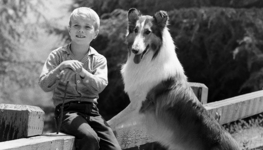 In this undated photo Jon Provost was his co-star Lassie. after seven years of chasing the collie around the Martin farm, Provost grew tired of the role and started chasing around L.A.'s Sunset Strip, where the 1960s were in full bloom. Yet it wasn't long before he fled that wild urban scene and in a figurative sense, returned to the farm, settling in rural Northern California, where he lives to this day. The Provost saga is told with refreshing candor in his new autobiography,