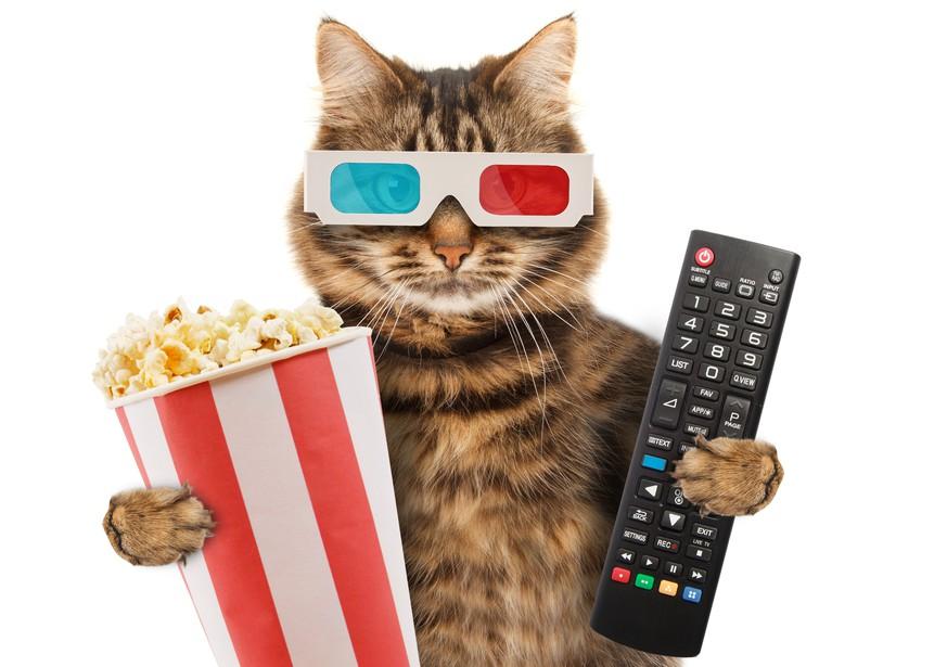 Mädchen Online-Dating liebt Katzen
