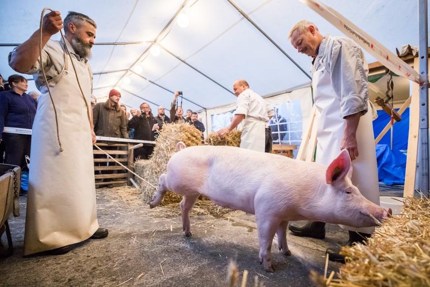 Schweineschlachtung Video