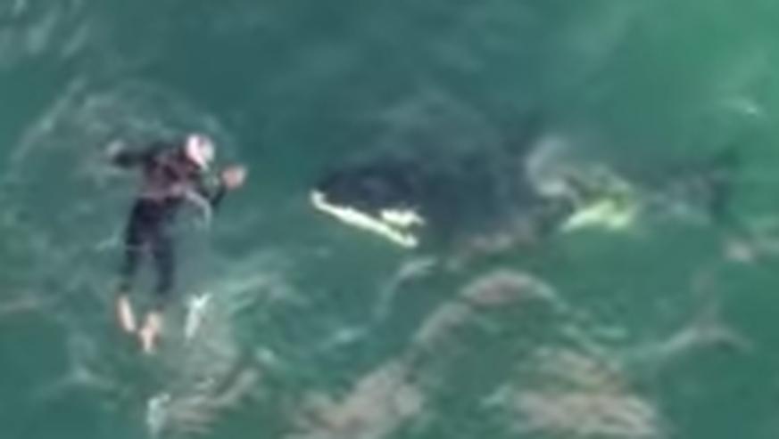 Orca Angriff Auf Menschen In Freier Wildbahn