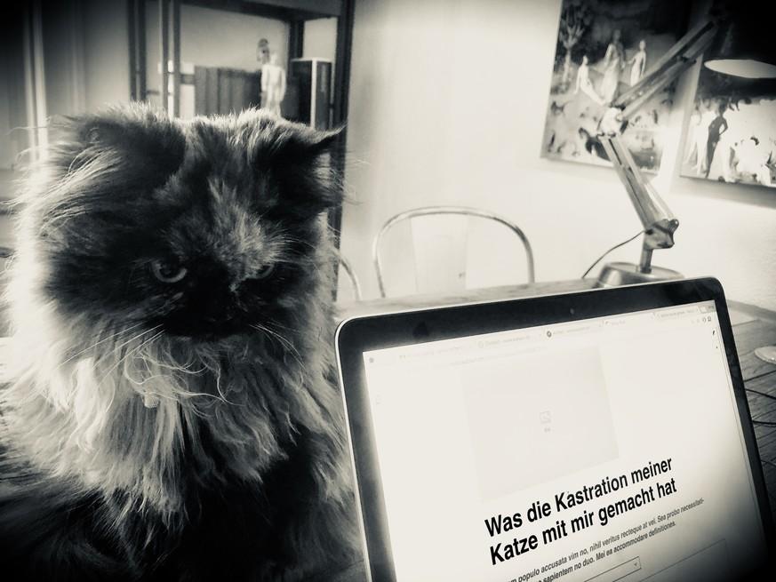 Meine Katze Verlor Ihre Eierstöcke Und Ich Meine Würde