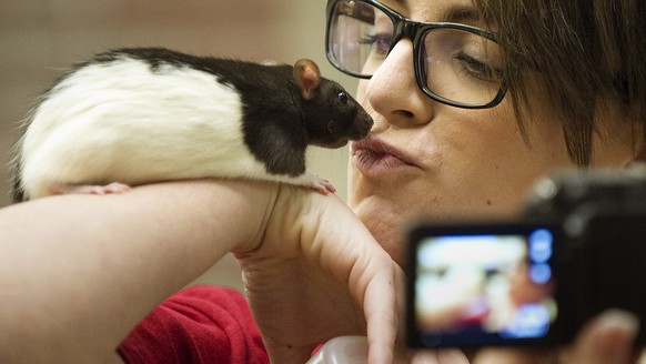 In this photo taken on Tuesday, Nov. 25, 2014, Becca Simley kisses her rat