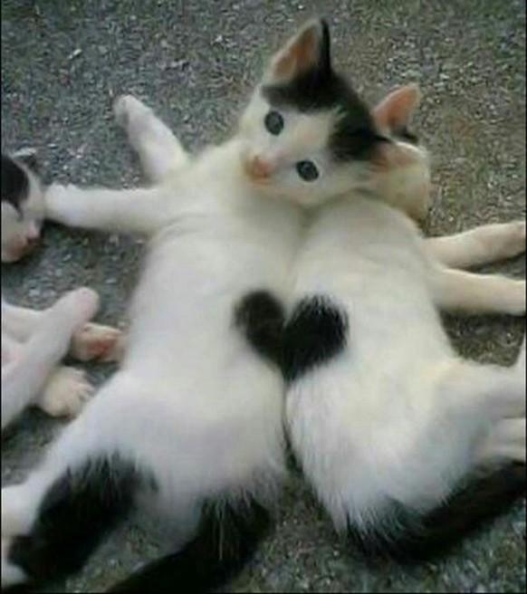 Für Einen Guten Start In Den Morgen Katzenbilder Mit Herz