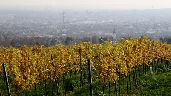 In this picture taken Tuesday, Nov. 11, 2014, a vineyard is pictured in front of the city of Vienna, Austria. Vienna's best-known vantage points both offer fantastic views of Vienna and on clear days beyond, to the pastures, vineyards and forests surrounding the city. For the strong of foot, an upward hike from the city's 19th district takes you to Kahlenberg with its viewing platform overlooking the panorama below. (AP Photo/Ronald Zak)