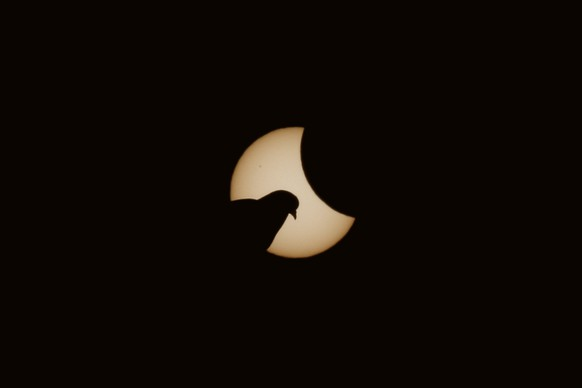 MUNICH, GERMANY - MARCH 20:  A dove is pictured  in front of the sun during a partial solar eclipse on March 20, 2015 in Muncih, Germany. Over Central Europe the moon was scheduled to cover approximately 75% of the sun for a short period starting at approximately 9:30am. The next solar eclipse will not occur until 2021.  (Photo by Alexander Hassenstein/Getty Images)