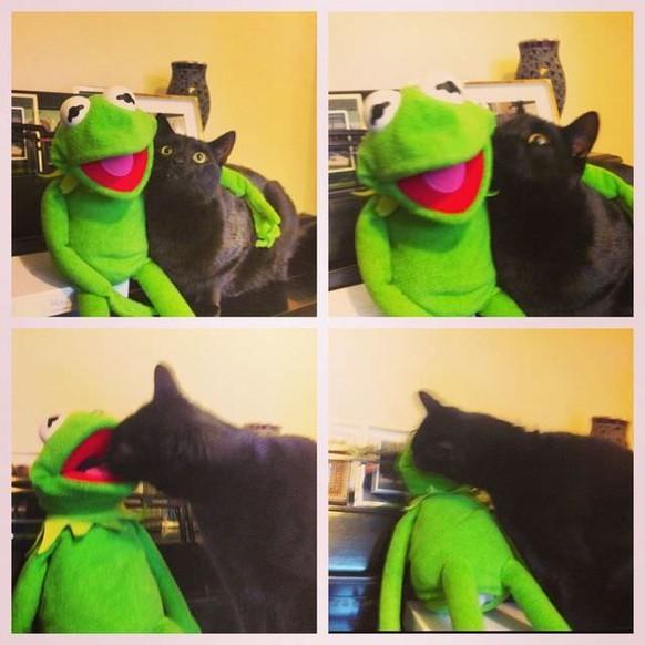 Kermit und Katze Cute News https://i.imgur.com/NwoXecd.jpg