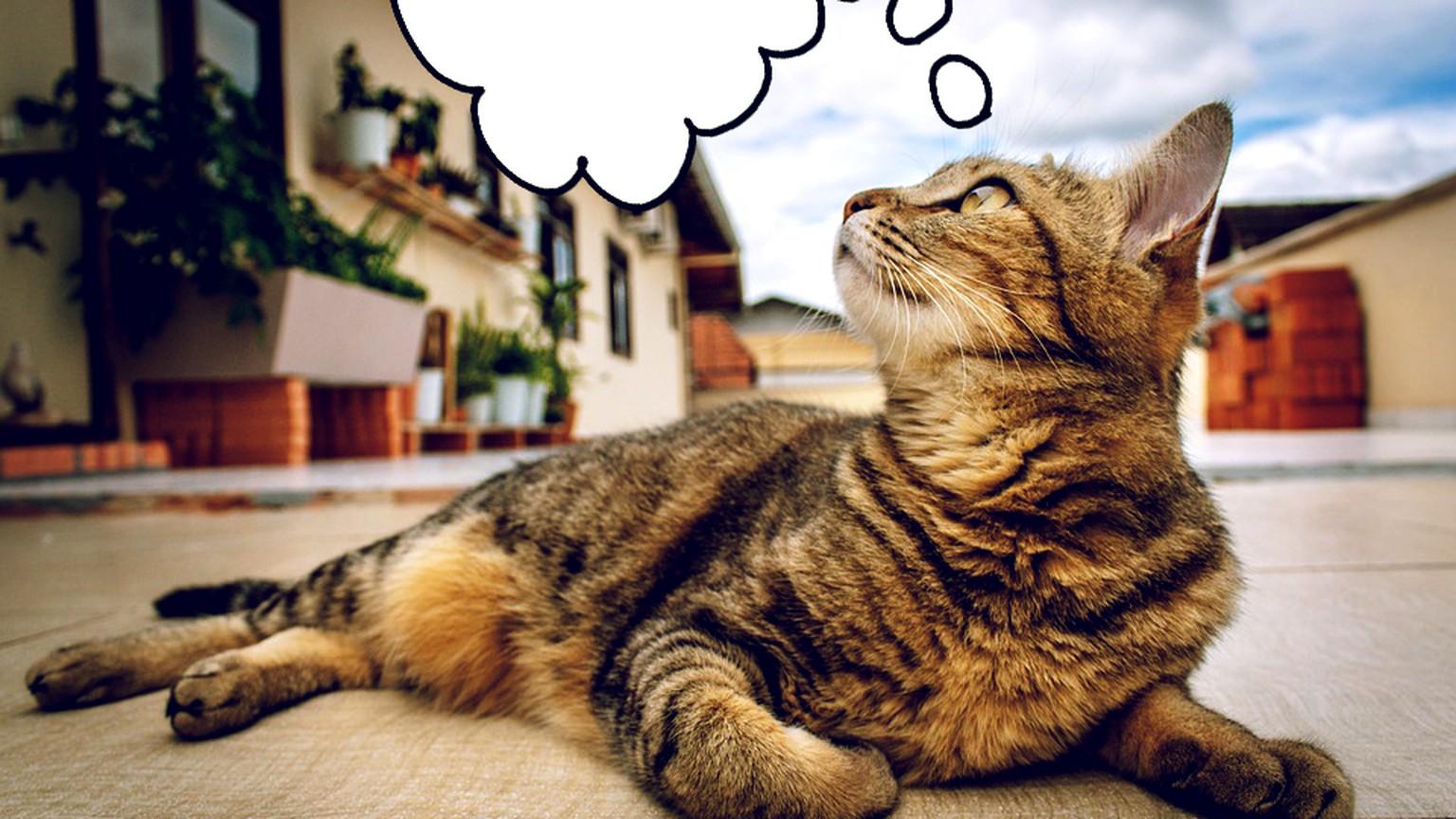 Das sind die 8 grössten Komplimente, die deine Katze dir machen kann ...