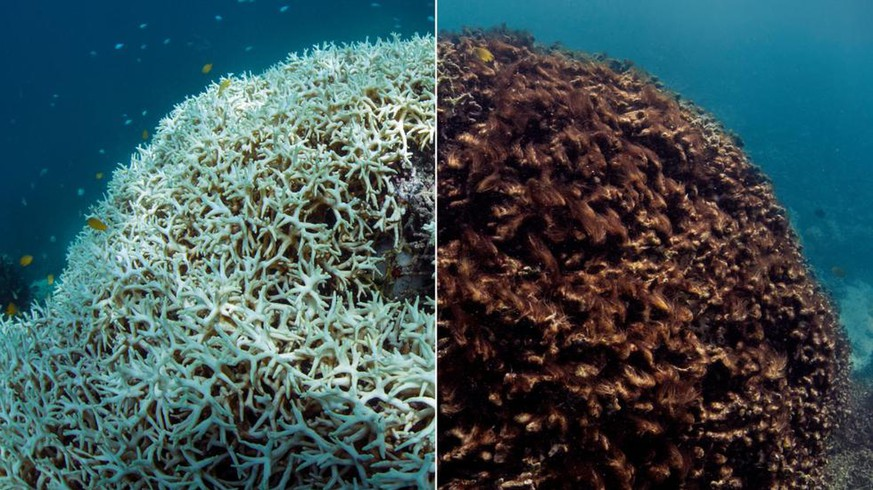 effects of nitrogen on coral reefs in australia The australian institute of marine science impact of runoff darwin harbour light is an important factor for the growth and survival of coral reefs.