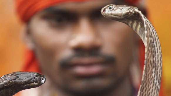A man displays snakes to attract alms from Hindu devotees who arrive to worship at a temple during the annual Nag Panchami festival, in Allahabad, India, Friday, July 28, 2017. The festival is dedicated to the worship of snakes. (AP Photo/Rajesh Kumar Singh)