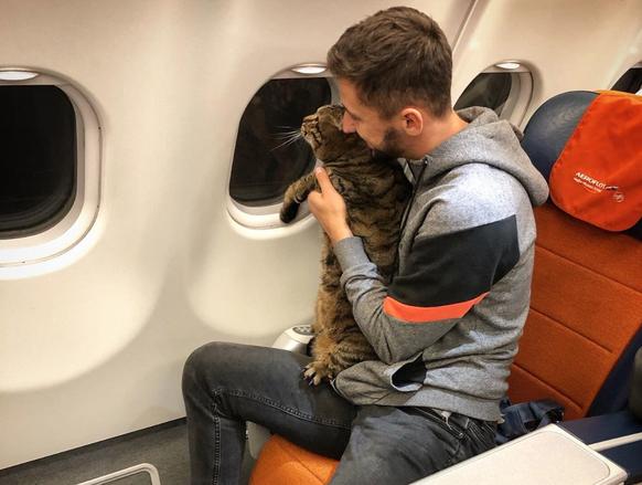 Katze war zu fett für die Passagier-Kabine im Flugzeug – Besitzer trickste Airline aus