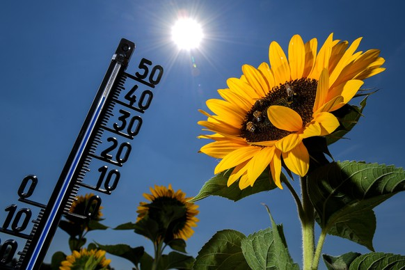 epaselect epa06913418 A thermometer among sunflowers shows an outside temperature of 39 degrees celsius in Kamp-Lintfort, Germany, 27 July 2018. According to metereologists, temperatures are expected to rise to over 35 degrees nationwide and close to 40 degrees. The German Weather Service (DWD) has issued a heat warning for large parts of Germany.  EPA/SASCHA STEINBACH