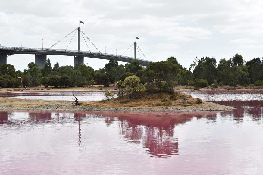 epa07464439 The Westgate Bridge is seen from Westgate Park, Melbourne, Australia, 26 March 2019. Water in the lake at Westgate park has turned pink due to high salt levels and has become a popular tourist destination.  EPA/JAMES ROSS  AUSTRALIA AND NEW ZEALAND OUT