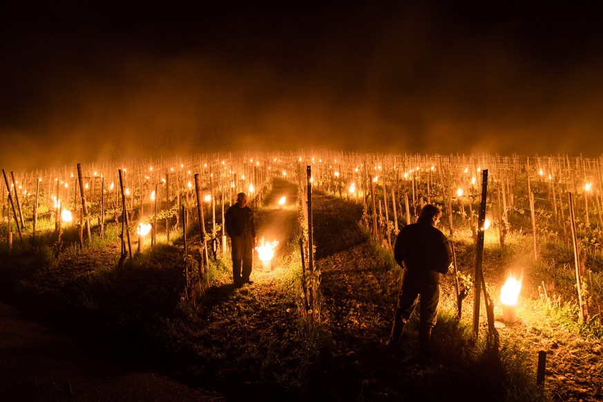 epa05280689 Anti-frost candles burn in a vineyard in Flaesch, in the Swiss canton of Grisons, Thursday, April 28, 2016. Due to unseasonally low temperatures, wine growers are attempting to protect their grape shoots with additional warmth from the anti-frost candles.  EPA/GIAN EHRENZELLER