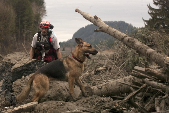 epa04140822 A canine search and rescue team searches for victims in the debris field after the mudslide near Oso, Washington, USA, 25 March 2014.  Authorities have advised that while 14 fatalities have been confirmed, there are still upwards of 176 reports of missing people or unaccounted individuals. The mudslide occurred early 22 March when the rain-soaked side of a mountain in Snohomish County broke free without warning and slammed into the homes, highway and a river below.  EPA/MATT MILLS MCKNIGHT