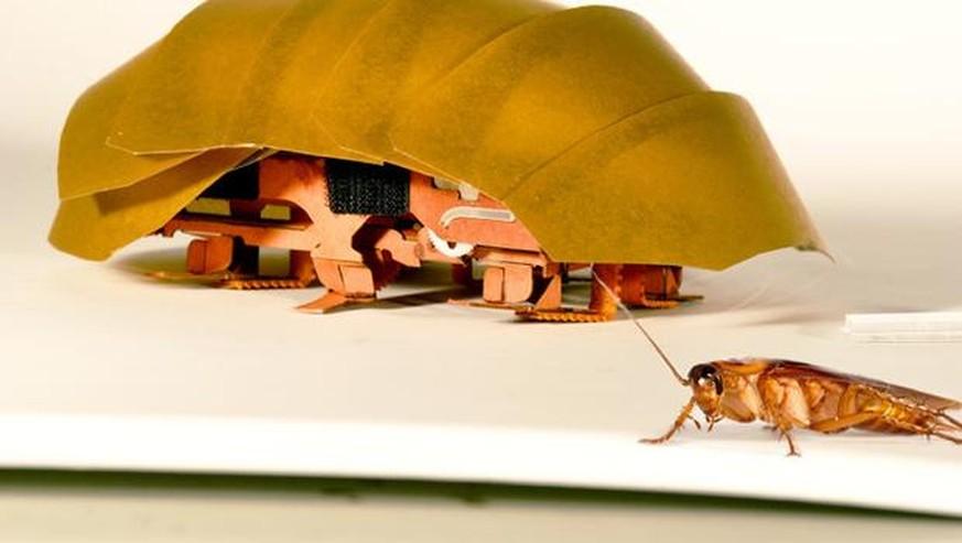 Kakerlaken Inspirierter Roboter Als Katastrophenhelfer Watson