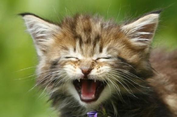 eine katze hat 7 leben