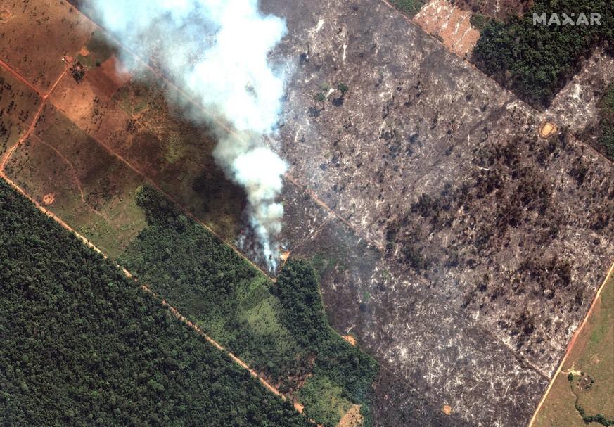 Brand im Amazonas: Wie schlimm ist es wirklich? Alle wichtigen Fakten