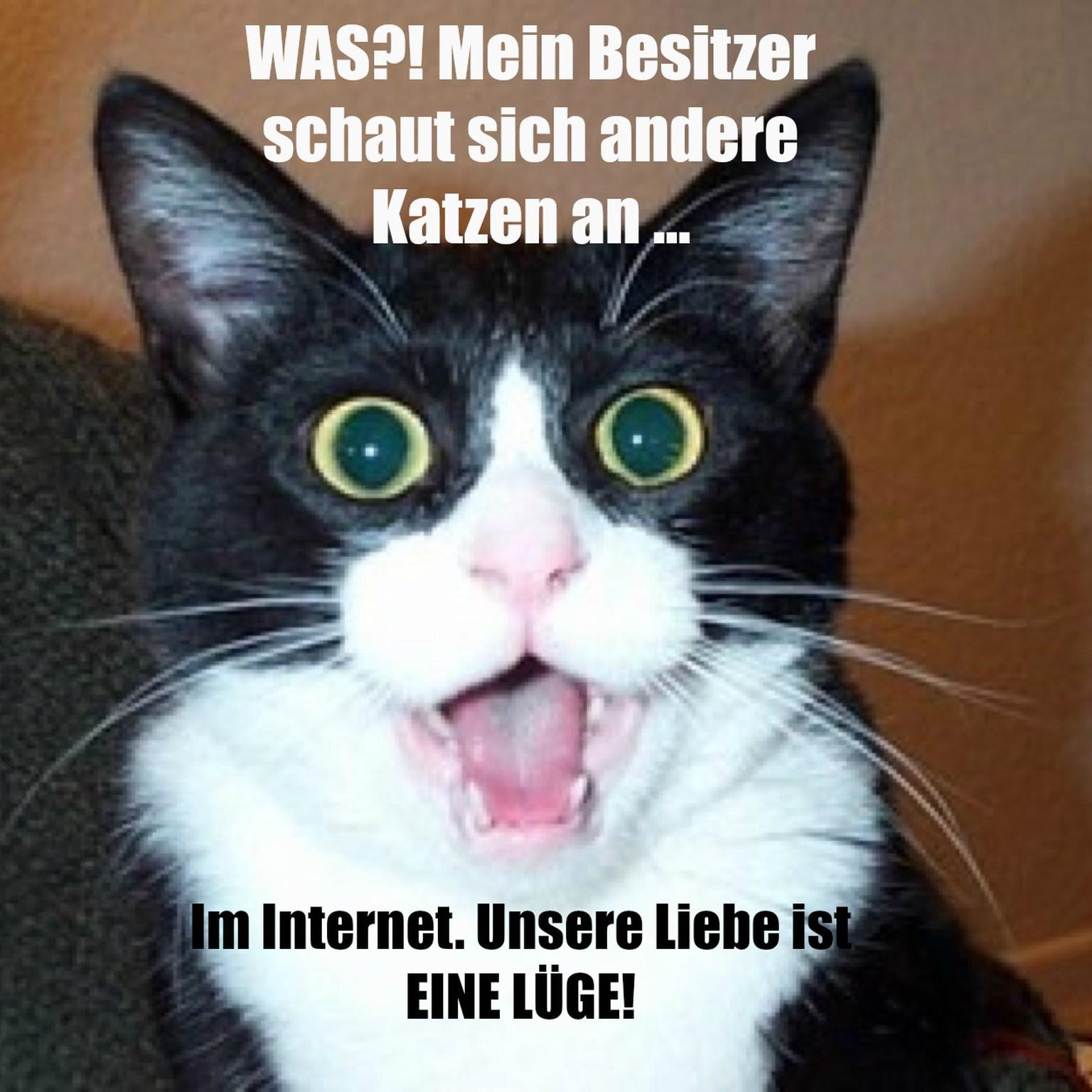 Katzen Memes Deutsch