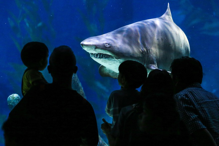 epa05639540 Chinese tourists look at a shark swimming towards them inside a large tank at the Siam Ocean World aquarium in Bangkok, Thailand, 20 November 2016. The Aquarium, located inside one of Bangkok's high-end shopping malls, is one of the largest in Southeast Asia and is host to over 30,000 marine creatures inside its ample 10,000 square meters of space. Popular among local families and tourists alike, the aquarium offers visitors the chance to walk through a 270 degree underwater tunnel, the chance to swim with sharks, or look at marine life from a glass-bottom boat  EPA/DIEGO AZUBEL