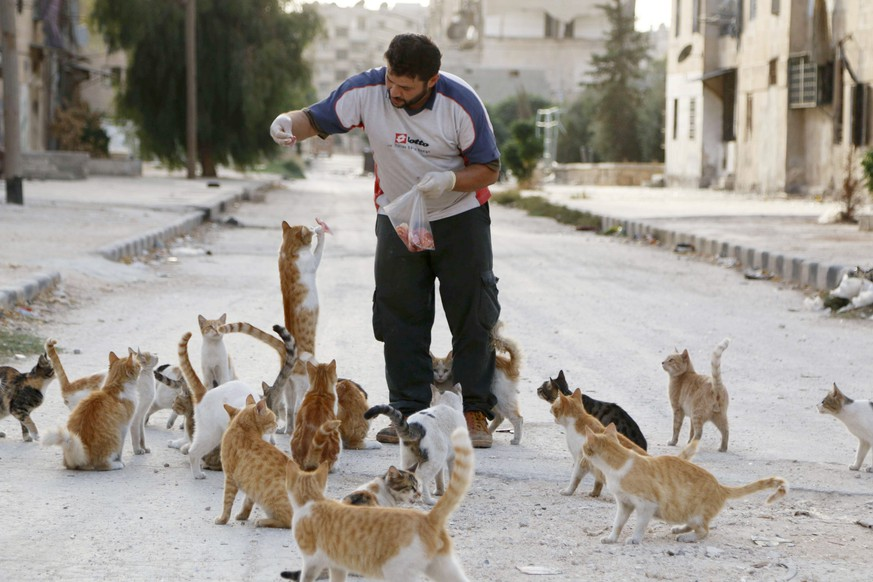 Alaa, an ambulance driver, feeds cats in Masaken Hanano in Aleppo, September 24, 2014. Alaa buys about $4 of meat everyday to feed about 150 abandoned cats in Masaken Hanano, a neigbourhood in Aleppo that has been abandoned because of shelling from forces loyal to Syria's president Bashar Al-Assad on it. Alaa said that he has been feeding and taking care of the cats for over 2 months. REUTERS/Hosam Katan (SYRIA - Tags: POLITICS CIVIL UNREST CONFLICT ANIMALS TPX IMAGES OF THE DAY)
