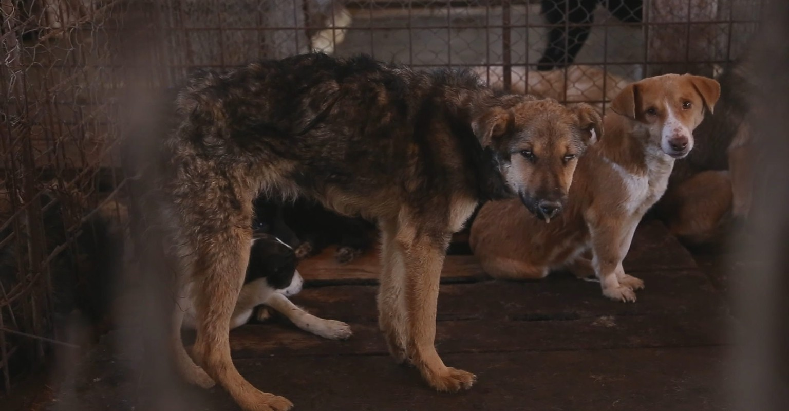 Romania | 2014 march to may | Public Dog Shelter