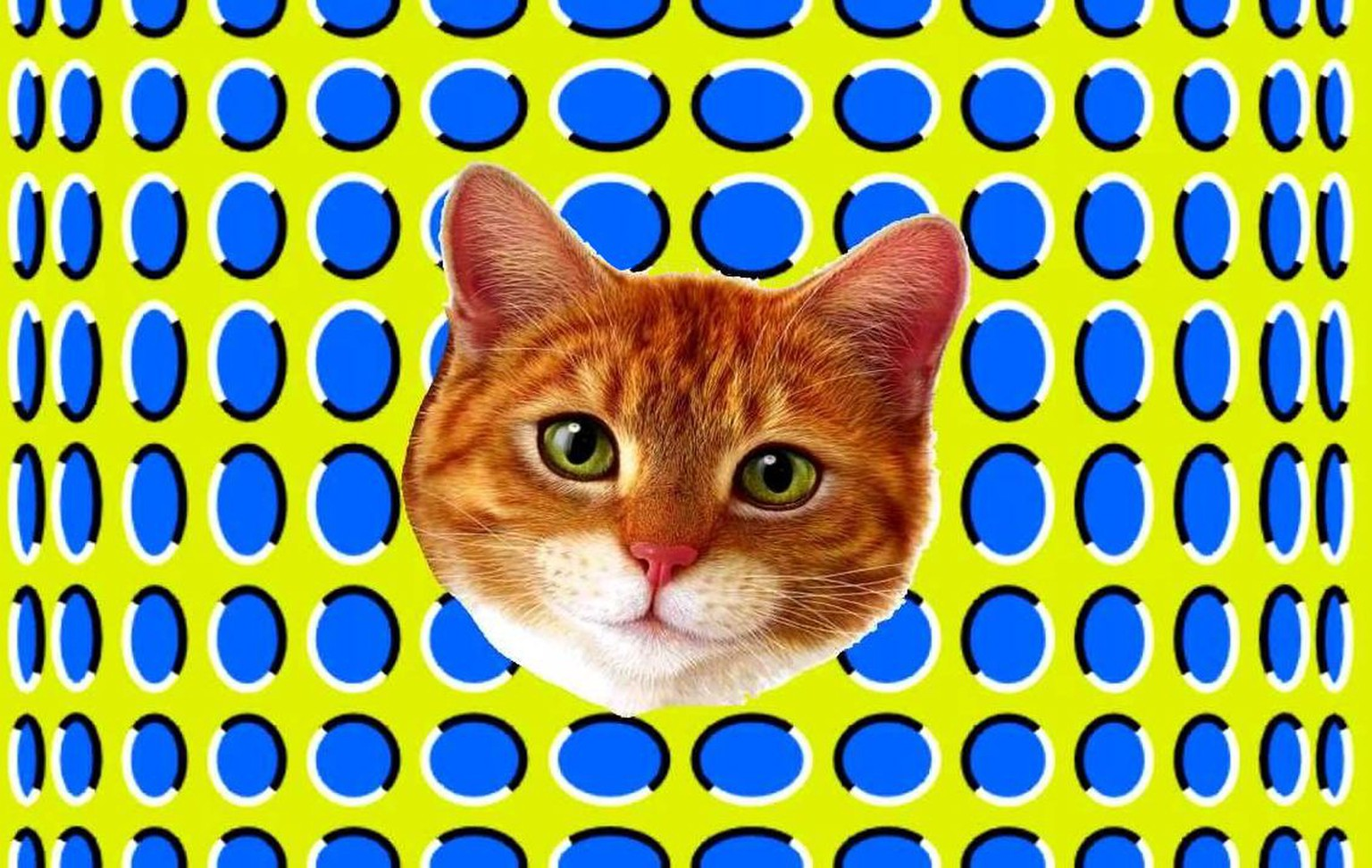 Optische Illusion Katze http://www.jackwild.com/sites/default/files/images/trippy-expanding-cat-mobile-casino-i-haz-the-happy-feels.jpg