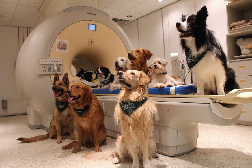 This undated photo made available by Eniko Kubinyi of Eotvos Lorand University in Budapest on Tuesday, Aug. 30, 2016 shows trained dogs, involved in a study to investigate how dogs process speech, posed around a scanner in Budapest, Hungary. A study published in the journal Science showed that their brains process words with the left hemisphere and use the right hemisphere to process intonation — just like humans. (Eniko Kubinyi/Eotvos Lorand University via AP)