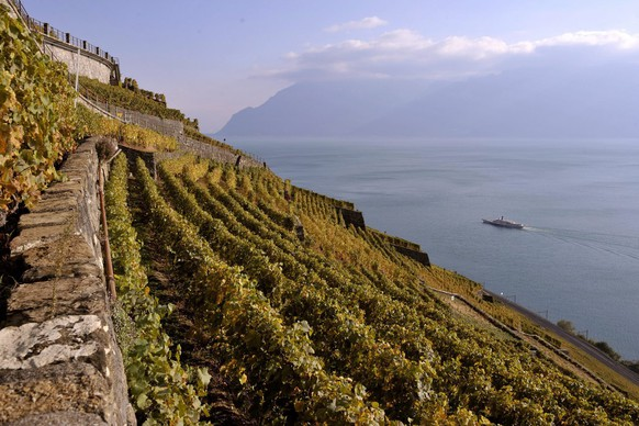 The Lavaux region's vineyards on the northern shore of Lake Geneva near Epesses in the canton of Vaud, Switzerland, pictured on October 15, 2009. The Lavaux Vineyard Terraces have been included into UNESCO's list of world cultural heritage sites in 2007. (KEYSTONE/Dominic Favre)