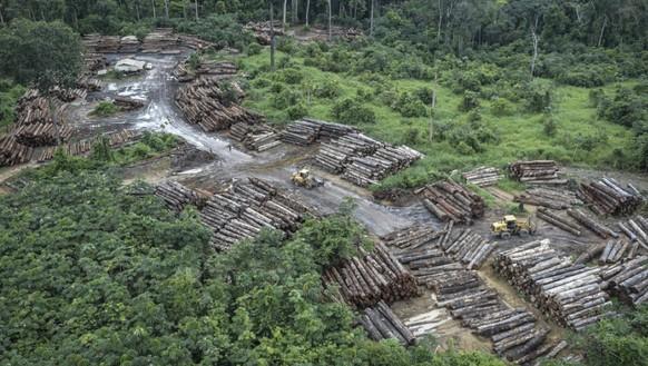 Ein ETH-Forscher erklärt, wie Künstliche Intelligenz den Regenwald rettet