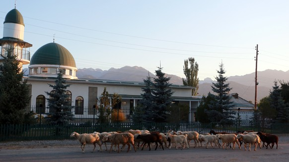 epa06176429 Sheep go to pasture in the morning at the  Ananyevo village 350 km from Bishkek, Kyrgyzstan, 01 September 2017. Muslims around the world will celebrate Eid al-Adha, one of the biggest Muslim religious festivals, by slaughtering animals in commemoration of Prophet Abraham's sacrifice of his son to show obedience to Allah.  EPA/IGOR KOVALENKO