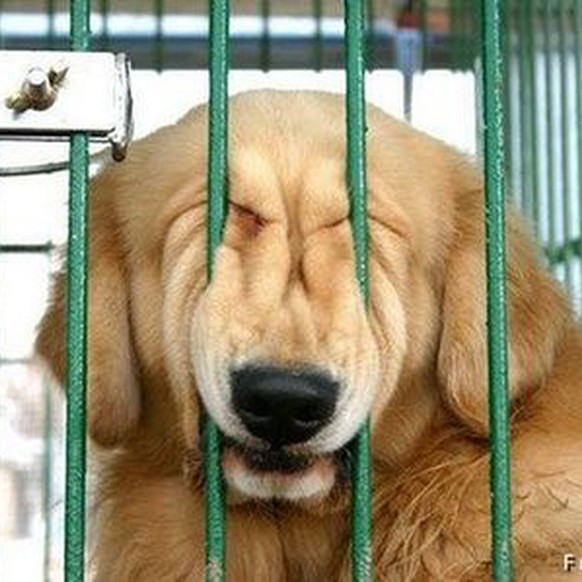 Hund im Käfighttps://1funny.com/dog-face-bar/